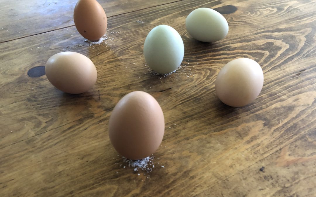 El huevo de la esperanza
